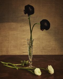 Still life with ranunculus by Heidi Rondak