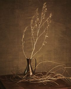Still life with dry plants by Heidi Rondak